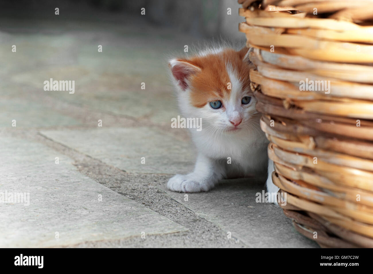 Four weeks old kitten hiding behind a basket outdoors - Stock Image