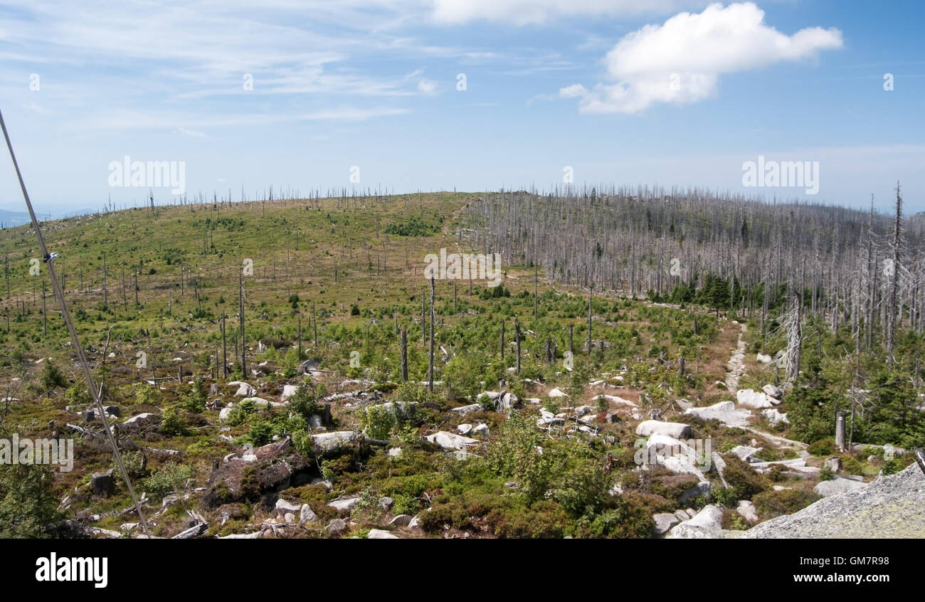 view from Plechy hill in Sumava mountains with forest devastated by bark beetle infestation and blue sky with clouds - Stock Image