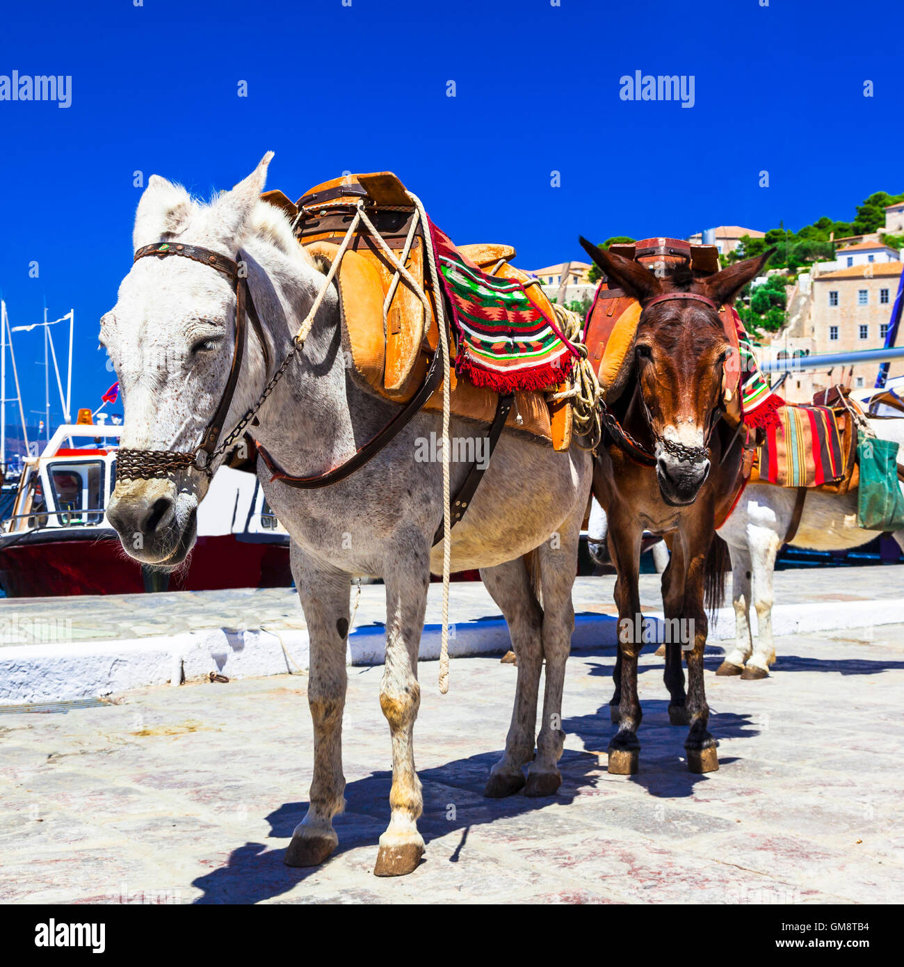 Holidays in Hydra,view with donkey,Greece - Stock Image