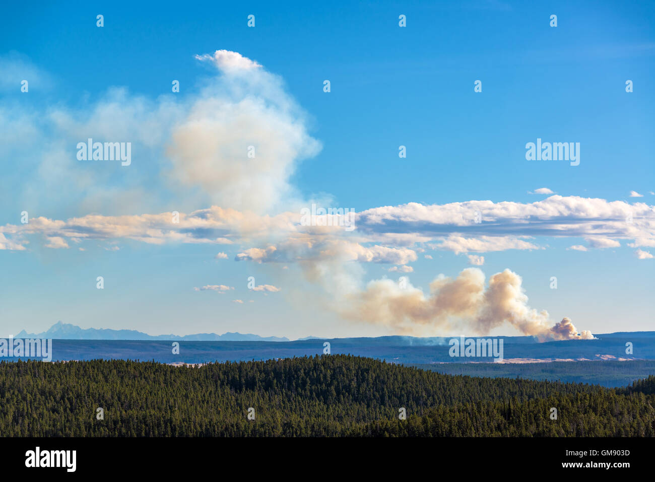 View of a wildfire burning in Yellowstone National Park - Stock Image