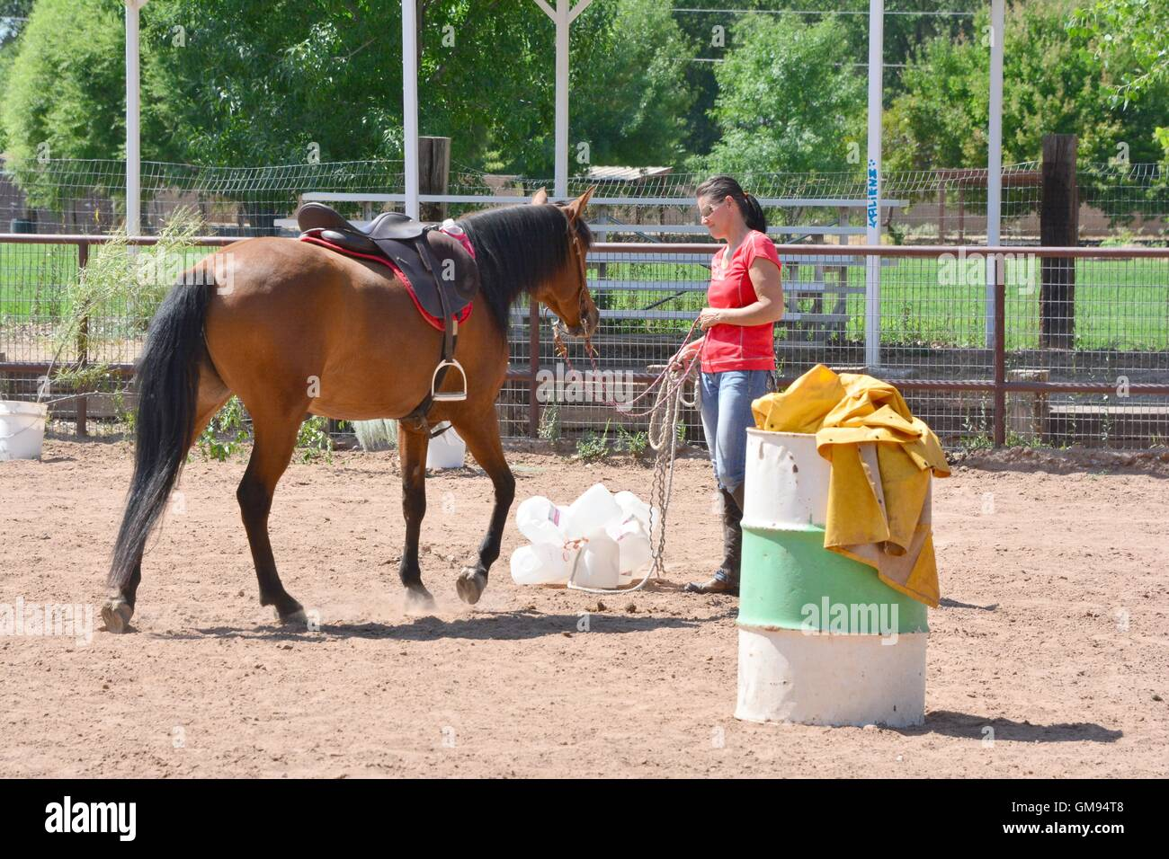 Horse being introduced to trail trash in the form of several milk jugs. - Stock Image