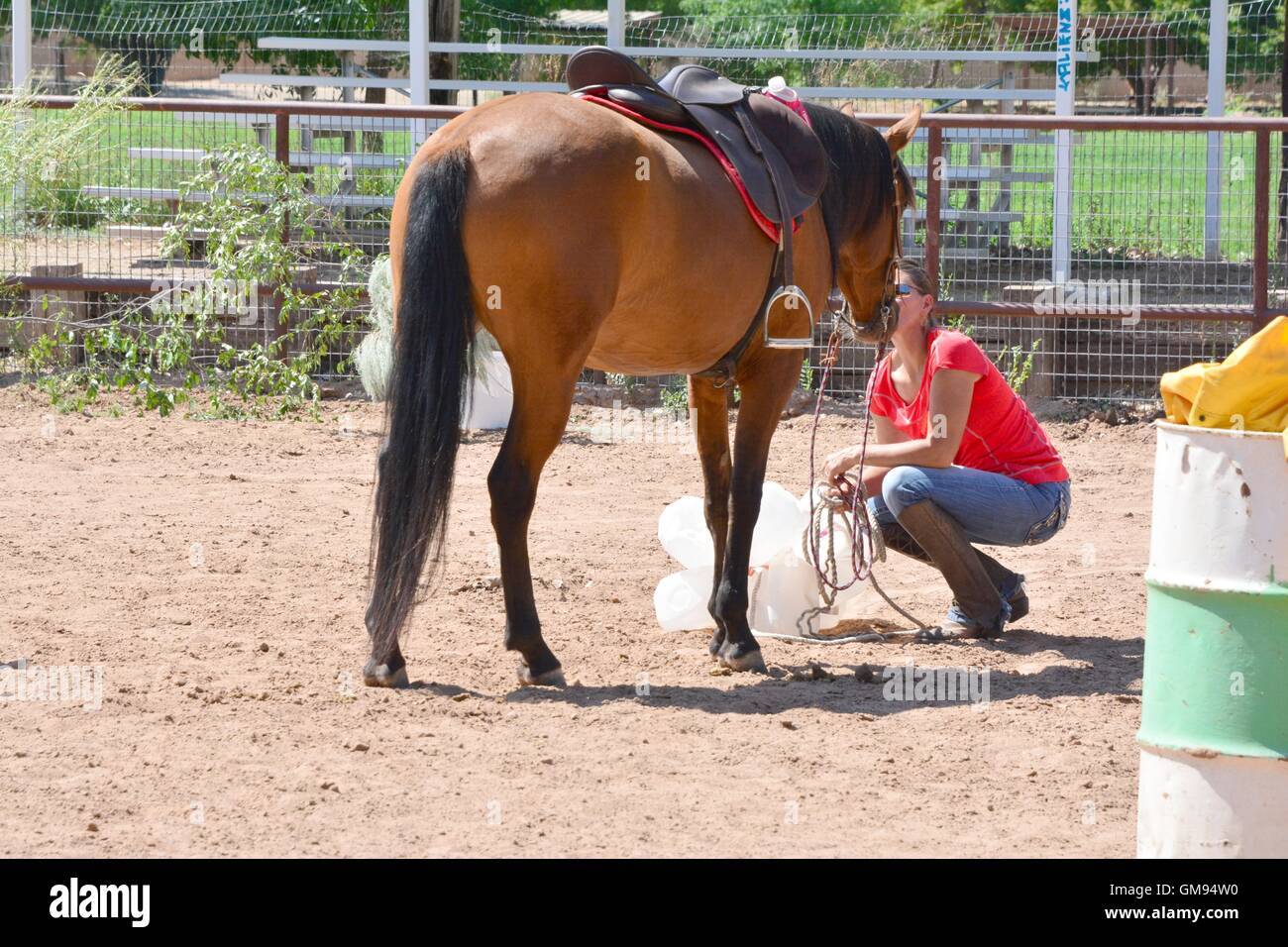 A horse gets a kiss from her owner after approaching a scary obstacle of milk jugs - Stock Image