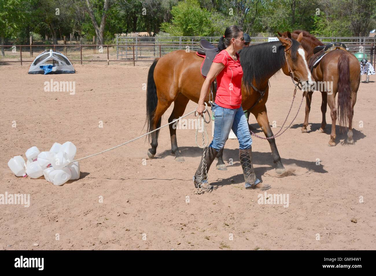 Arabian Horse learning about milk jug on a rope from her handler. New Mexico, USA - Stock Image
