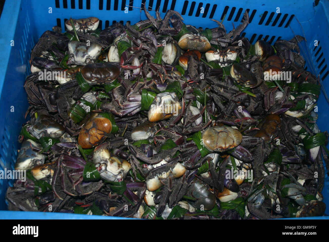 crabs for sale - Stock Image