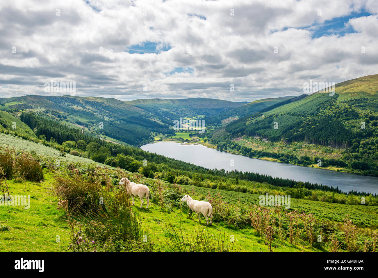Looking down on to the Talybont Valley and Reservoir in the Central Brecon Beacons National Park on a sunny summer - Stock Image