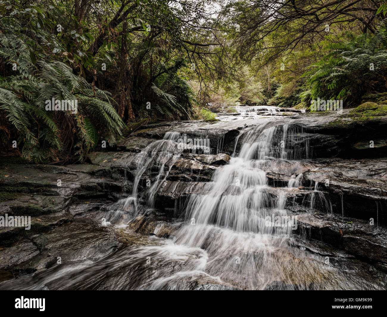 Australia, New South Wales, Blue Mountains National Park, Leura Cascades, Waterfall in forest - Stock Image