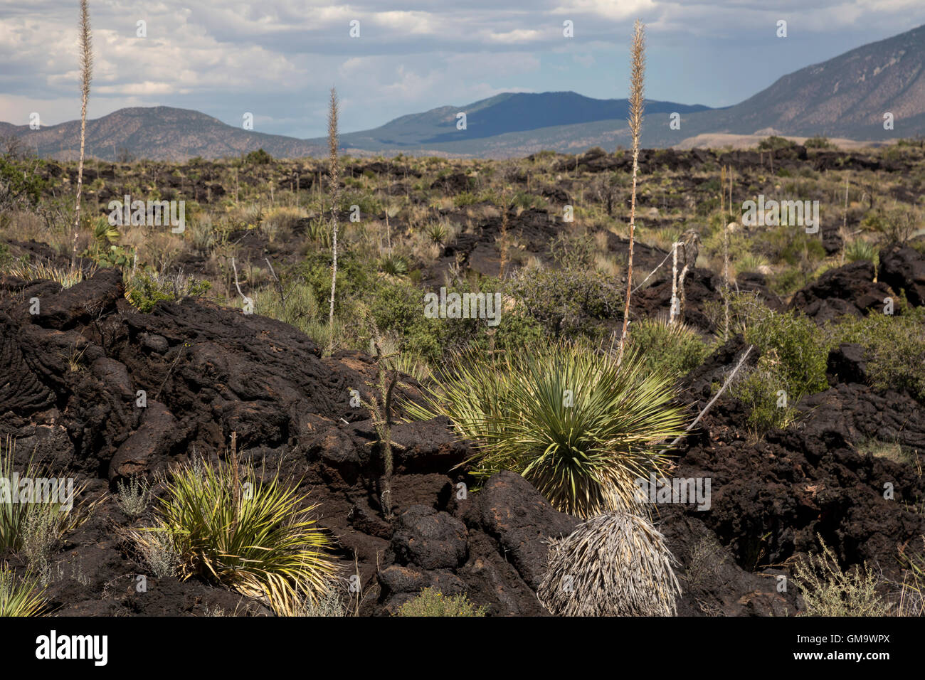 Carrizozo, New Mexico - The Malpais Lava Flow at the Valley of Fires Recreation Area. The lava flow is the result - Stock Image