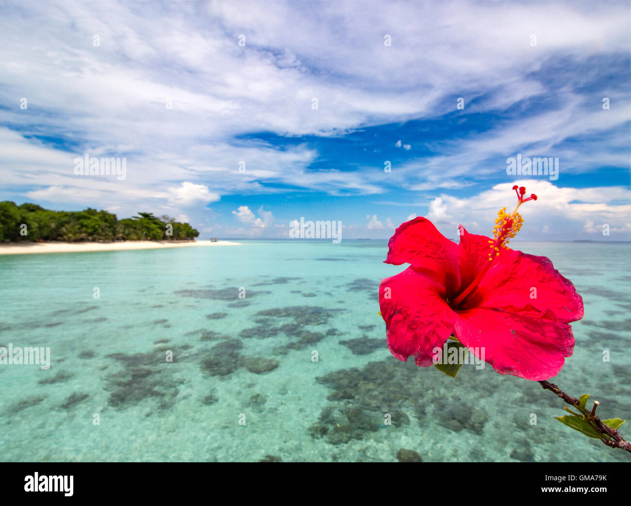 Hibiscus flowers beach stock photos hibiscus flowers beach stock hibiscus flower framing the crystal ocean next to an empty beach of a lovely island izmirmasajfo