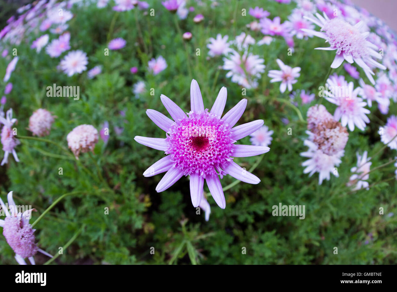 Close Up Of A Beautiful Garden With Blooming Flowers Using A Super
