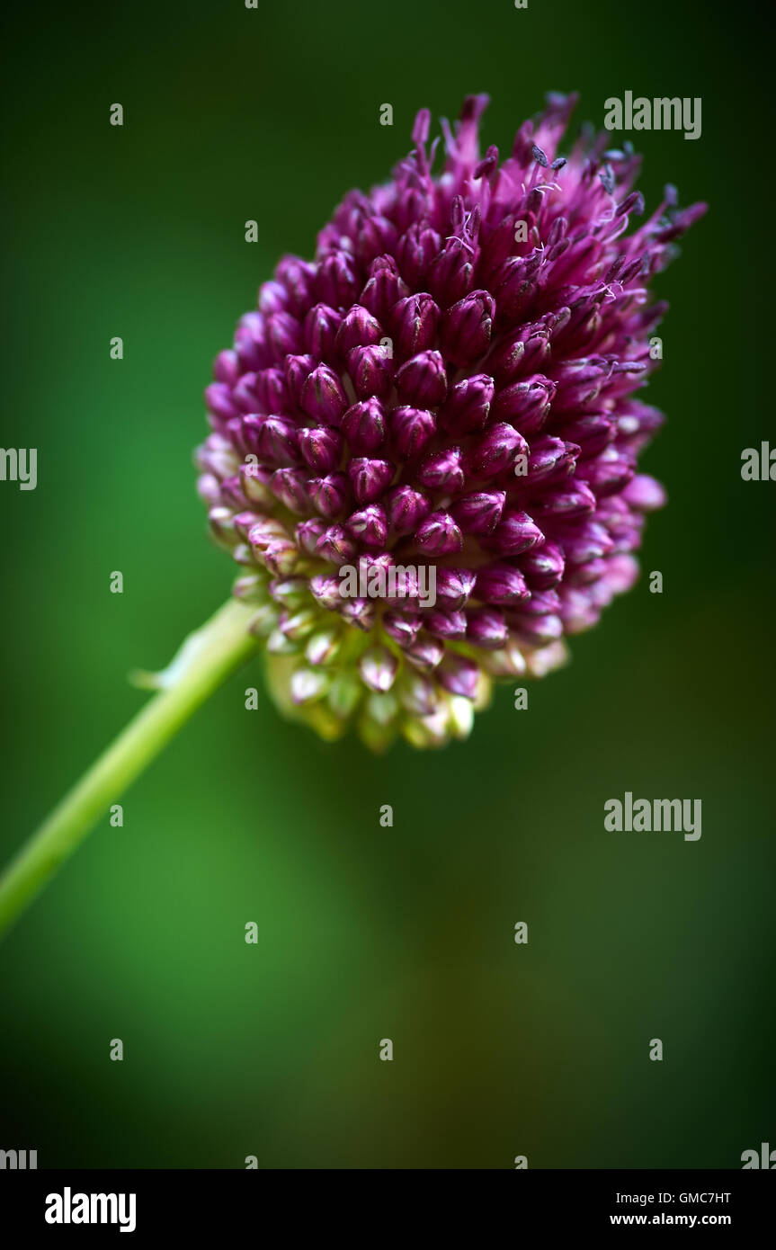 Plants and flowers, caribbean asian - Stock Image
