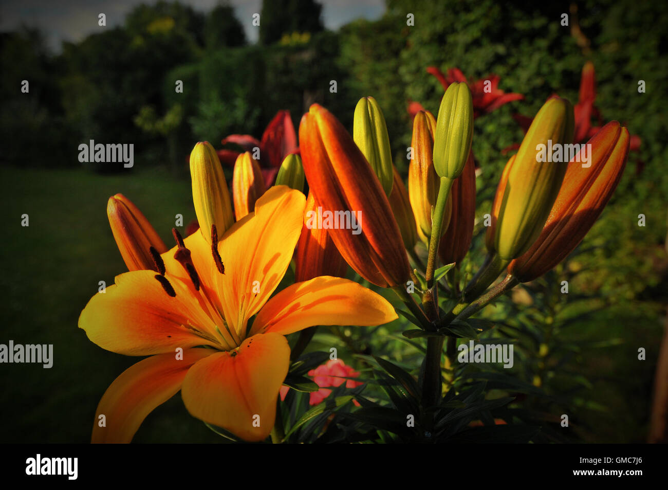 Plants and flowers, caribbean asian Stock Photo