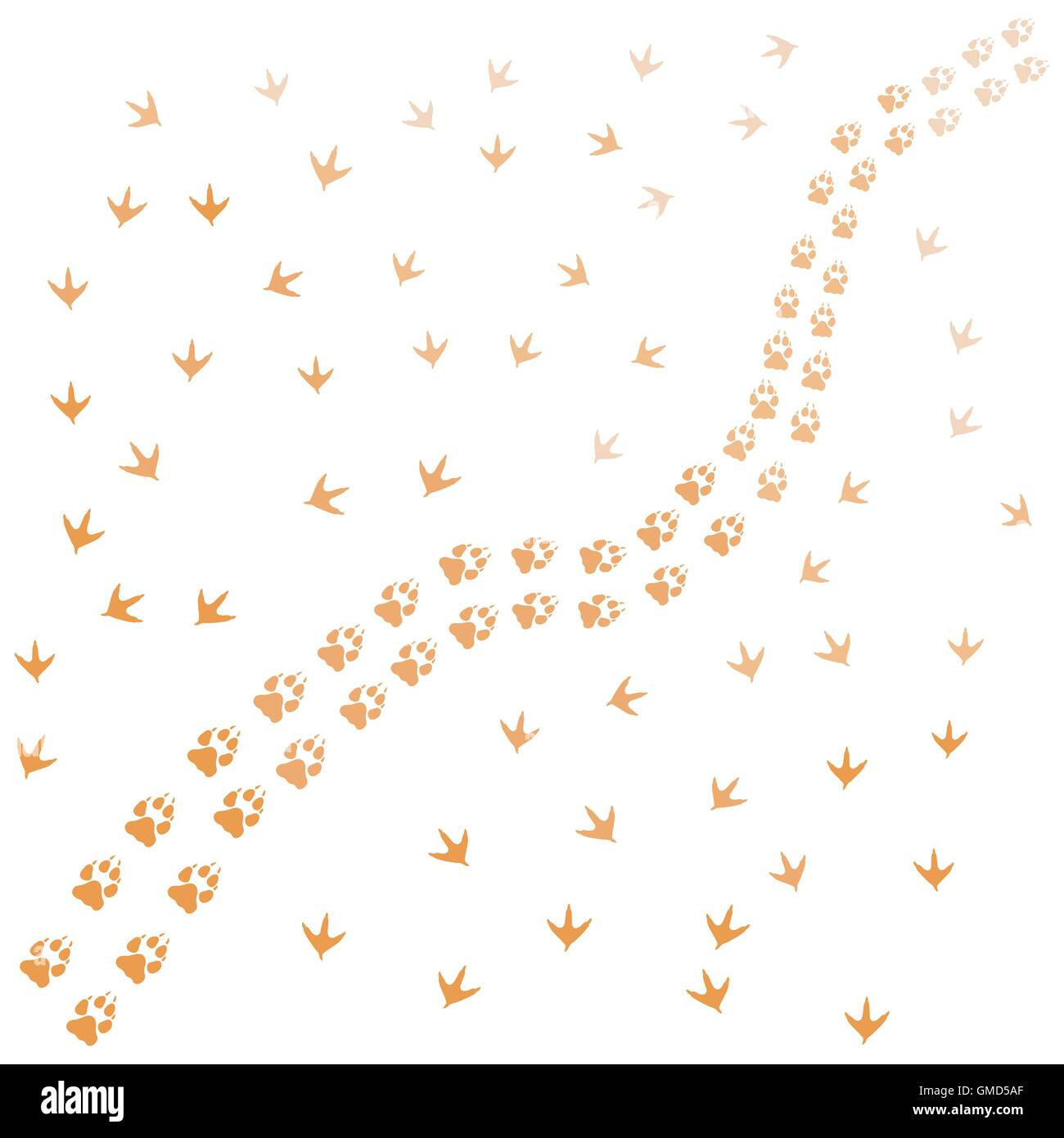 Nice picture of  traces of birds and animals on a white background - Stock Image