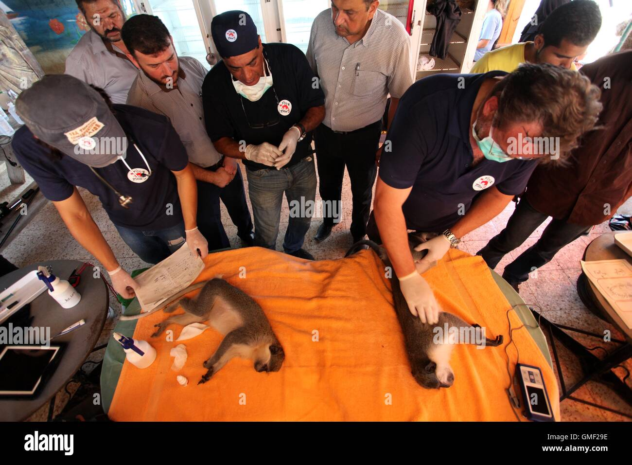 Khan Yunis, Gaza Strip, Palestinian Territory. 23rd Aug, 2016. Members of the international animal welfare charity - Stock Image