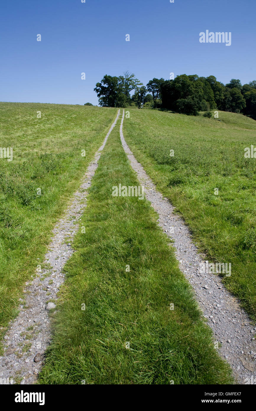 Track through large field at Dinefwr Park - Stock Image