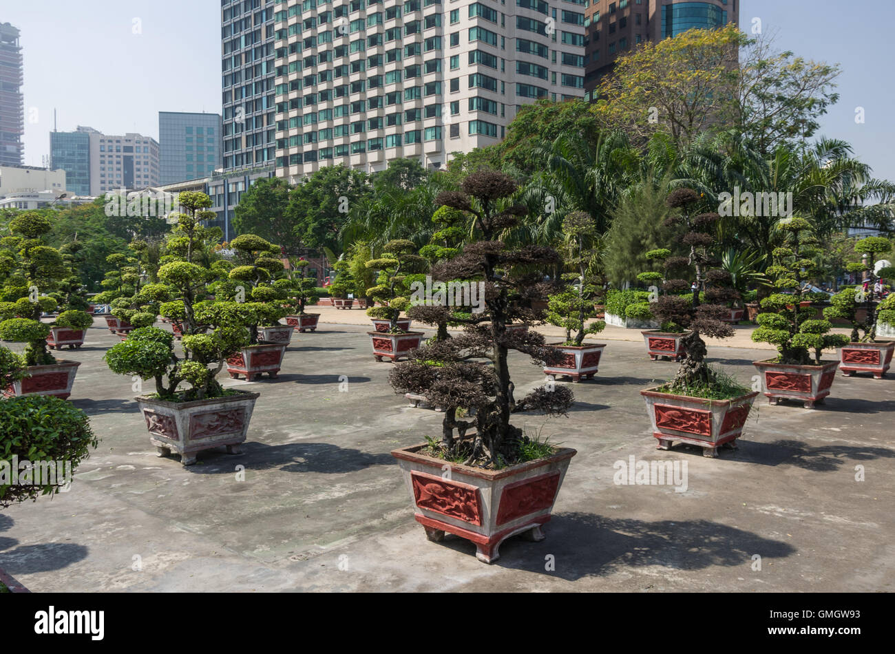 bonsai tree for office. Square With Little Bonsai Tree Modern Office Building On Background. Ho Chi Minh City, Vietnam For