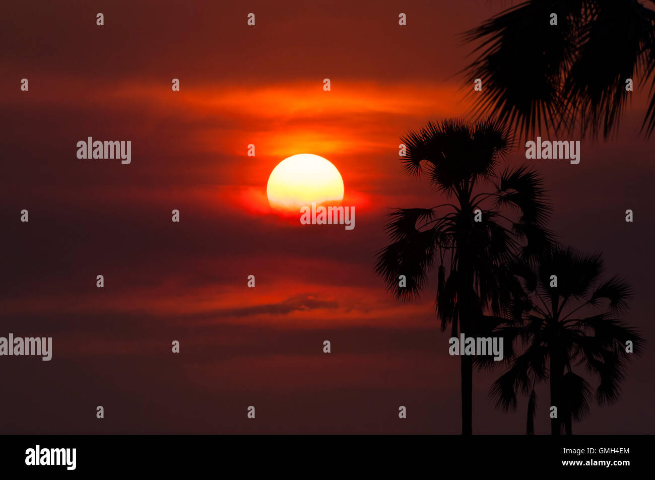 Silhouette of palm trees in the Okavango Delta, in Botswana; Concept for travel safari and travel in Africa Stock Photo