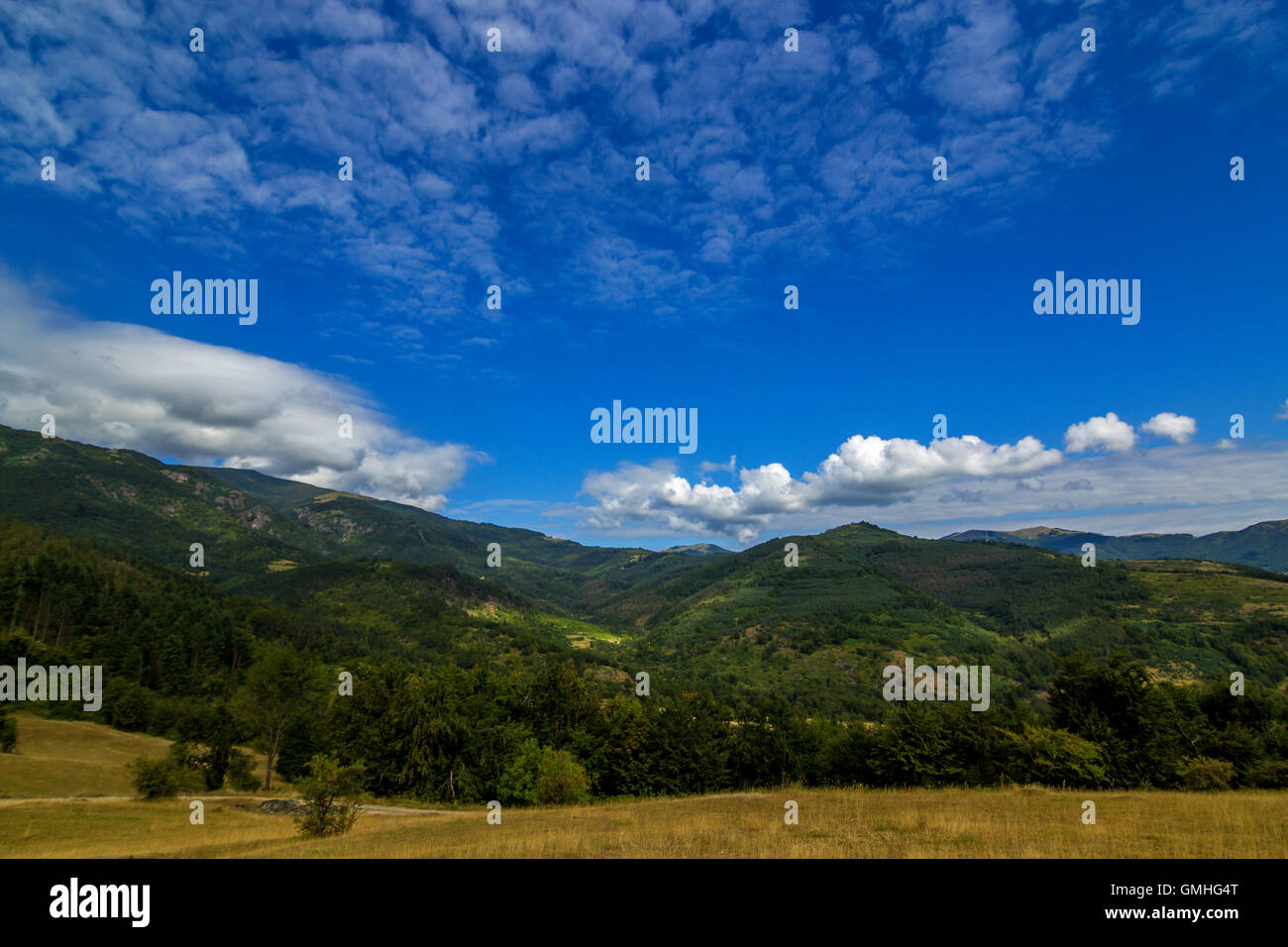 late summer mountain landscape. meadow on hill side with spruce forest under the blue sky with clouds - Stock Image