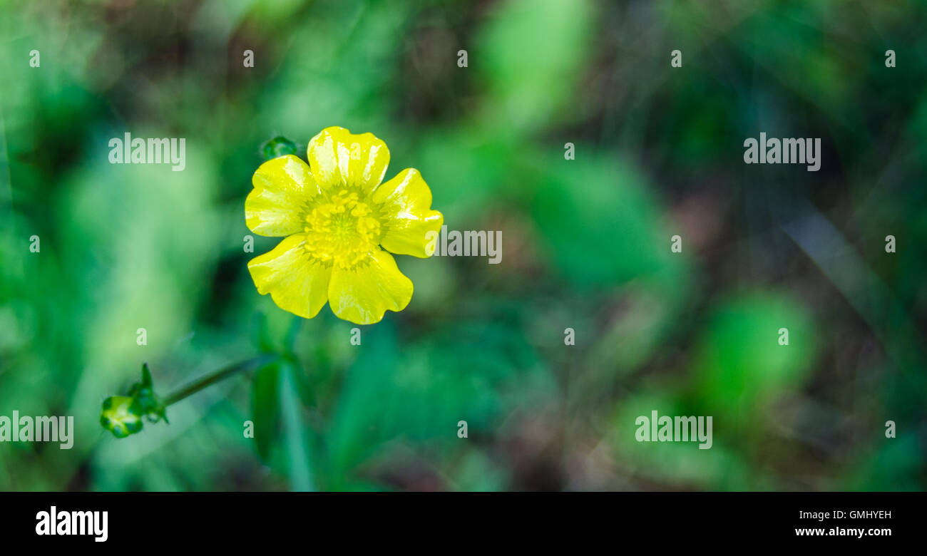 Yellow Weed Stock Photos Yellow Weed Stock Images Alamy