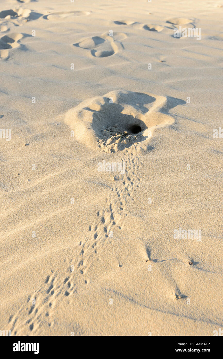 Crab hole and tracks in the sand, New South Wales, Australia - Stock Image