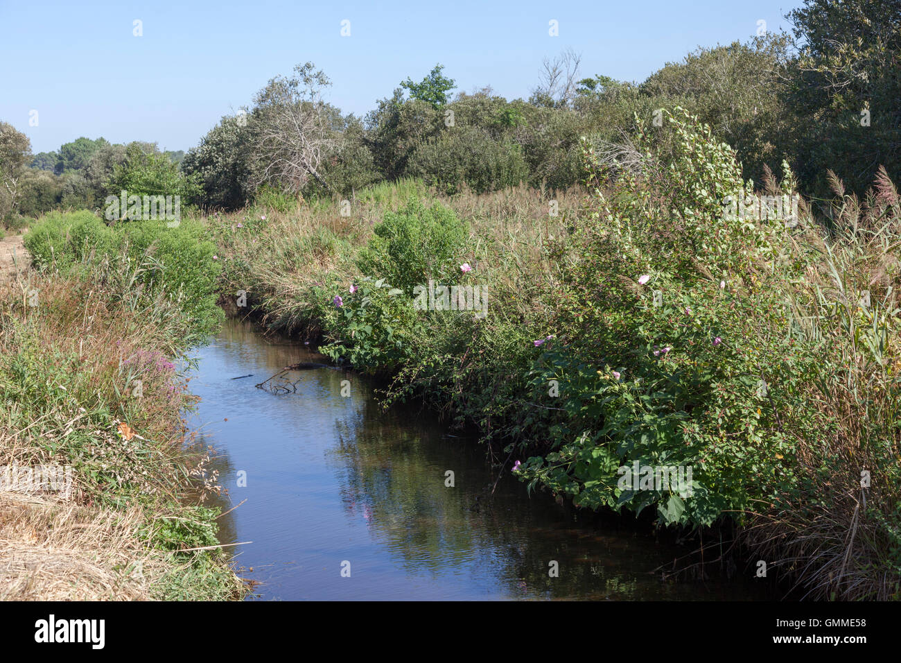 A view of the tangle of wild plants on both sides of a drain to get rid of water in the 'Barthes' (Soorts - Stock Image