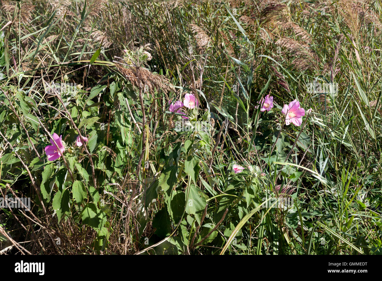 A view of the tangle of wild plants in the 'Barthes' of Monbardon (Soorts Hossegor - Landes - France). - Stock Image