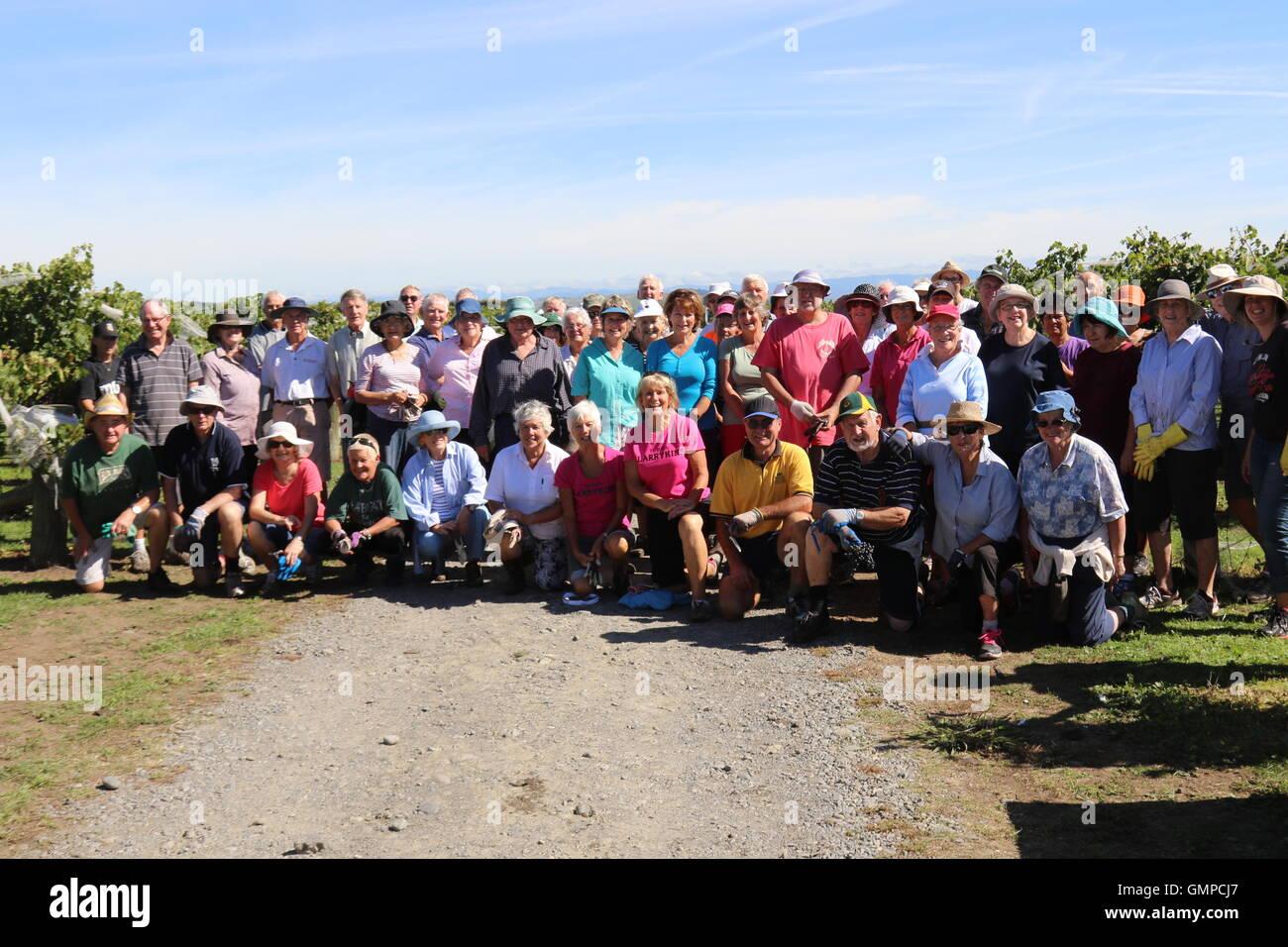 Group photo of Grape pickers at Te Mata Estate Winery, North Havelock, New Zealand - Stock Image