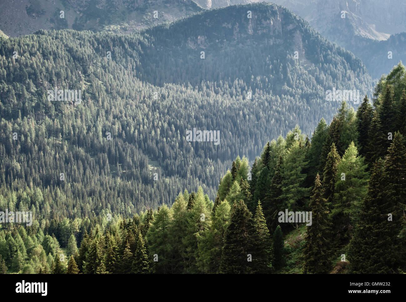 The Dolomites, Trentino, northern Italy. The Passo San Pellegrino in summer Stock Photo