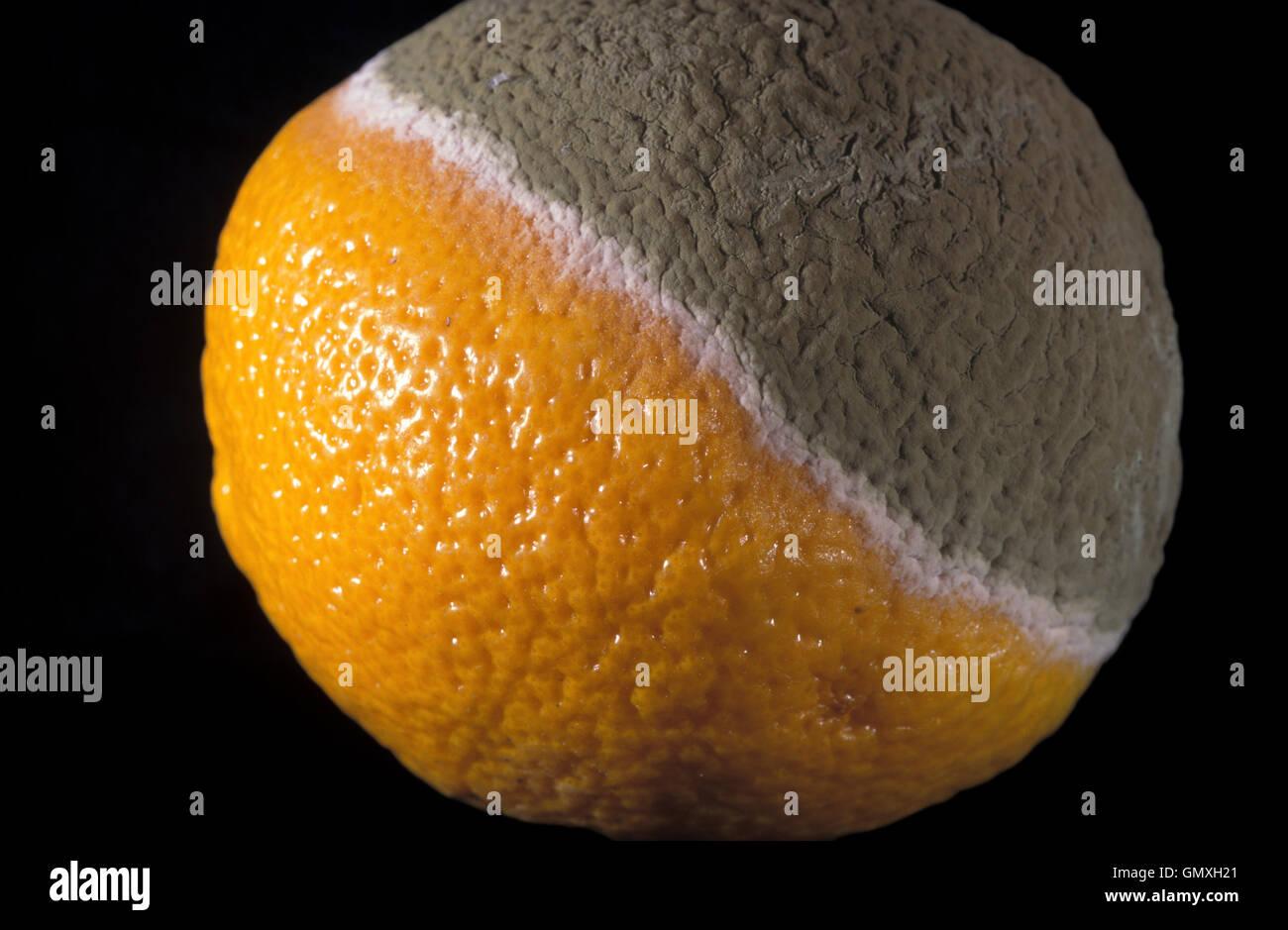 Half rotten orange with mold. Portugal - Stock Image