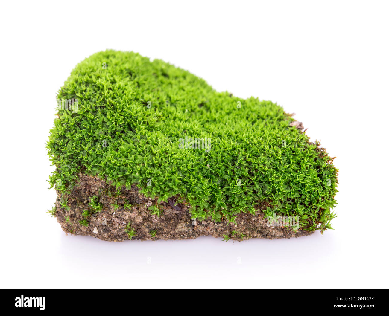 Green Moss Grow On Soil On White Background Stock Photo 116195287