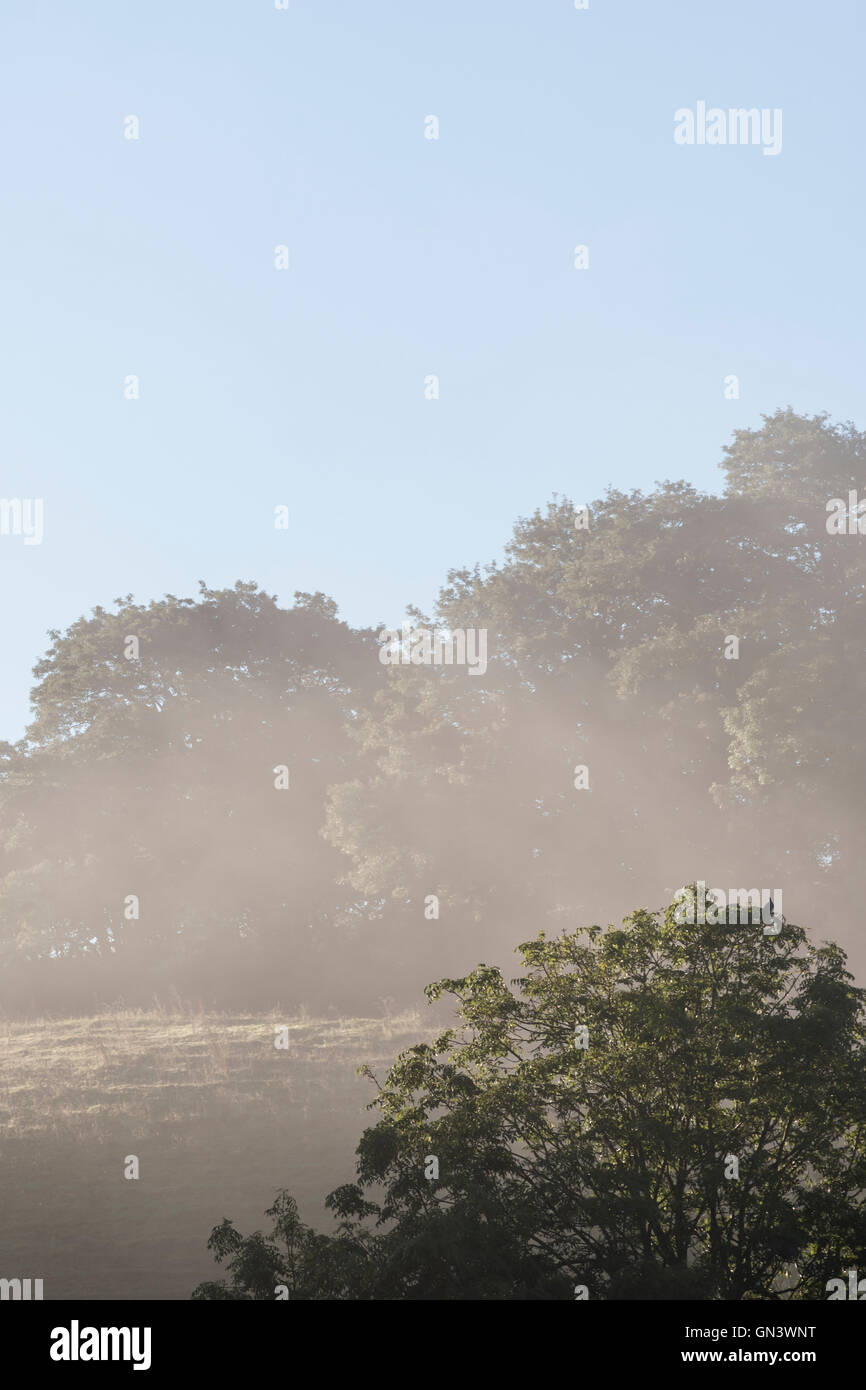 Morning mists as Lostwithiel, Cornwall. - Stock Image