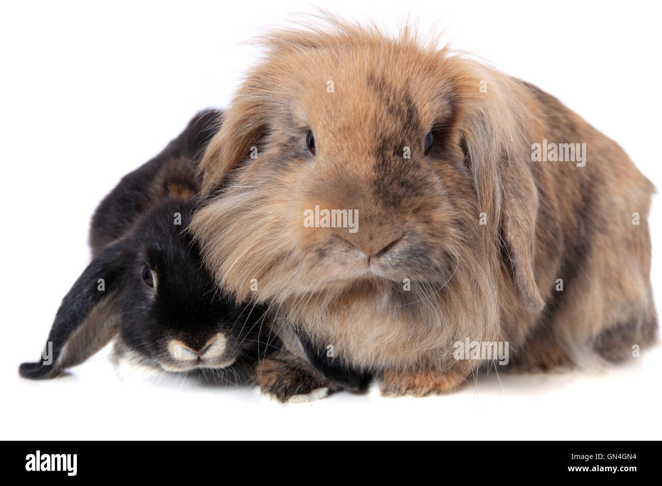 Two rabbits - Stock Image