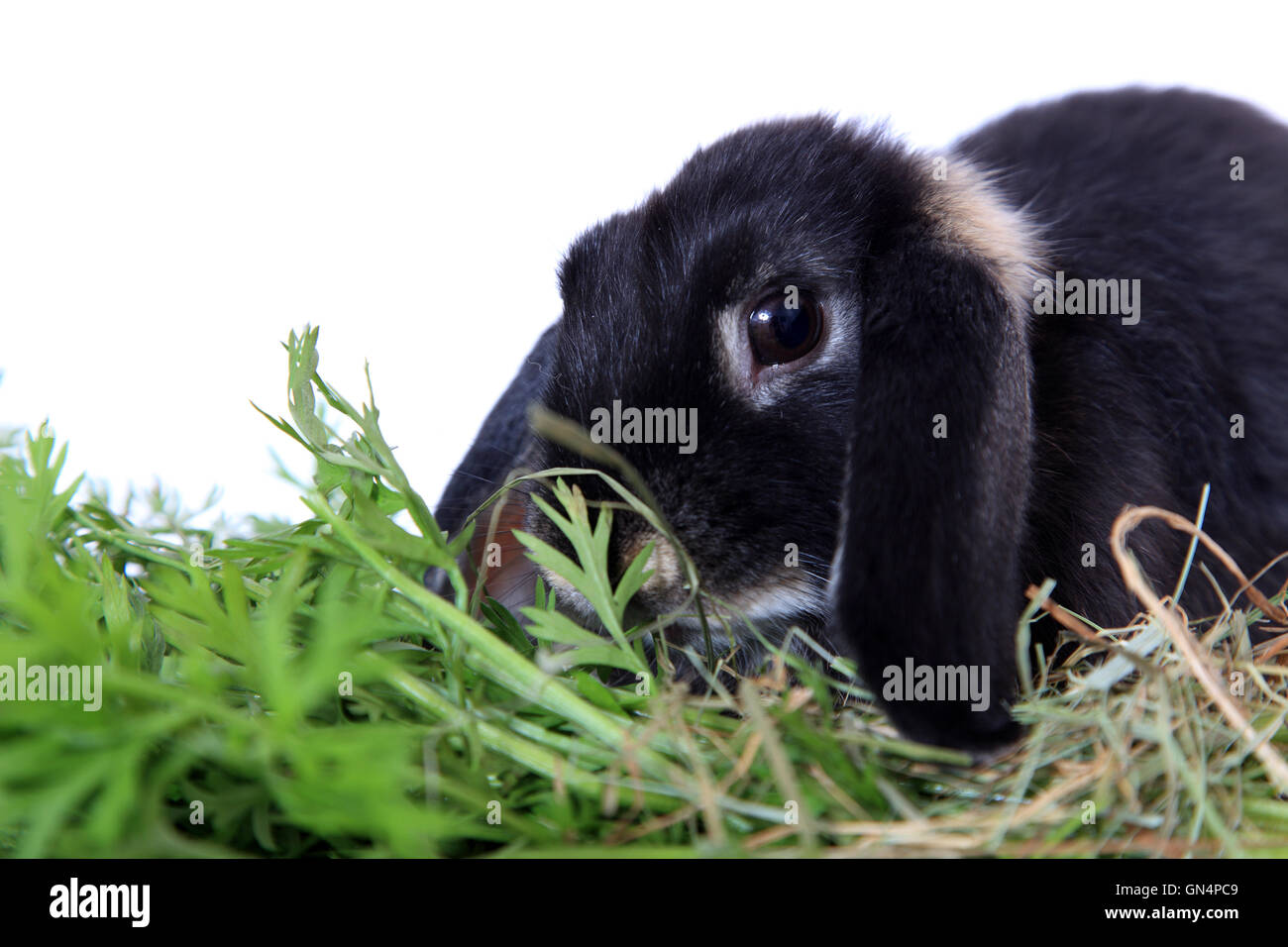 Cute rabbit - Stock Image