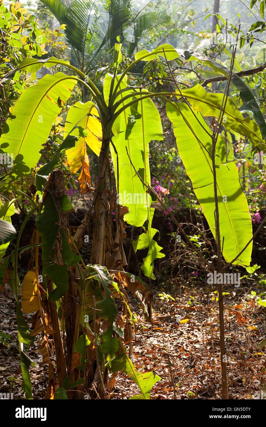 small palm tree - Stock Image