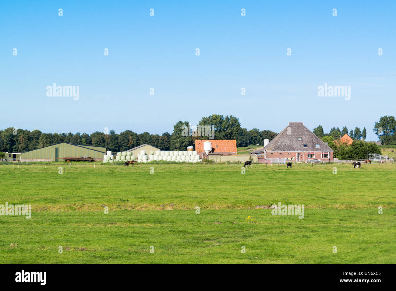 Farmhouse and meadows in polder near Spijkerboor in North Holland, Netherlands - Stock Image