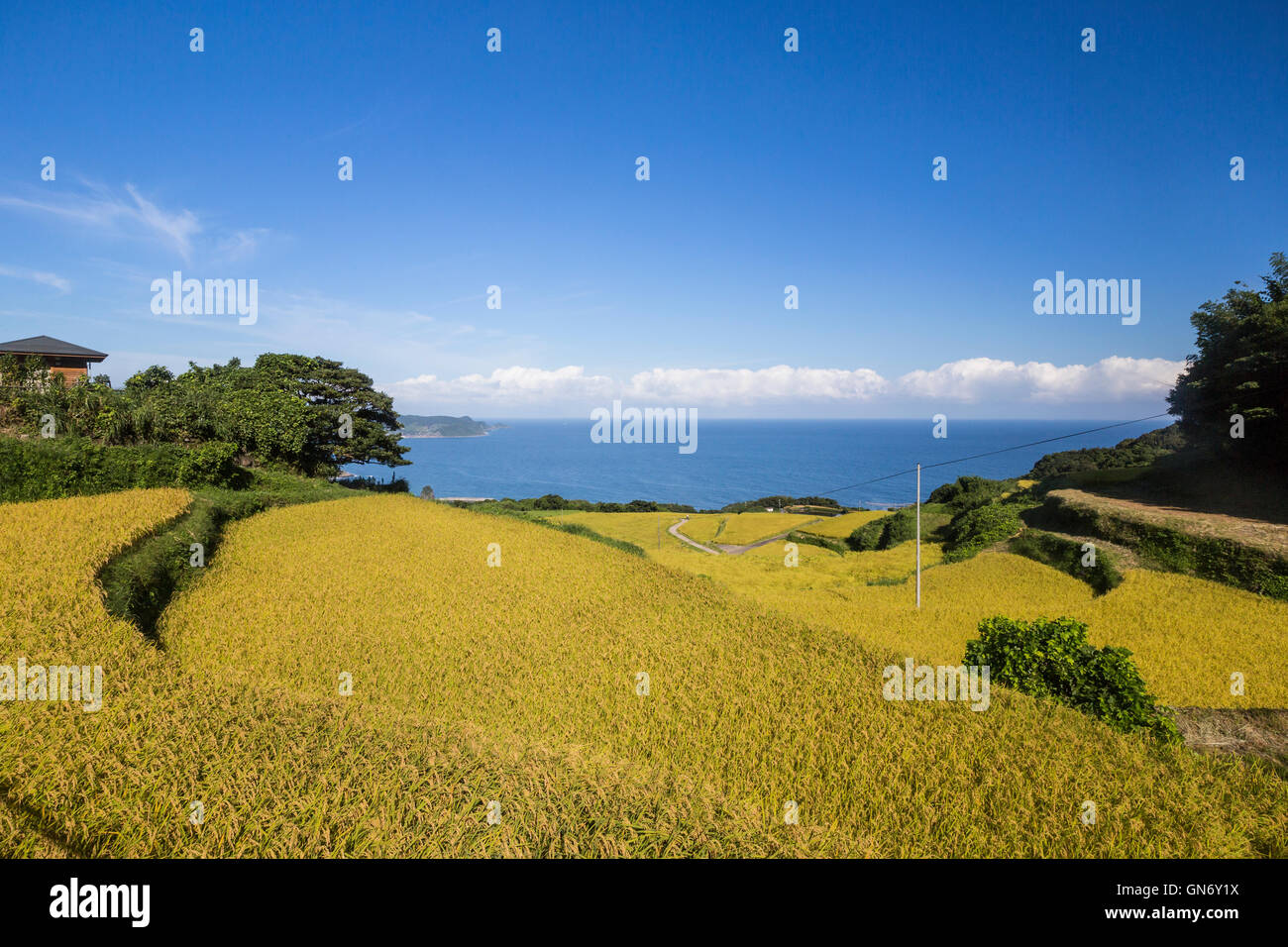 Rice Terraces of Higashi Ushirobata, Nagato, Yamaguchi Prefecture, Nagato, Japan - Stock Image