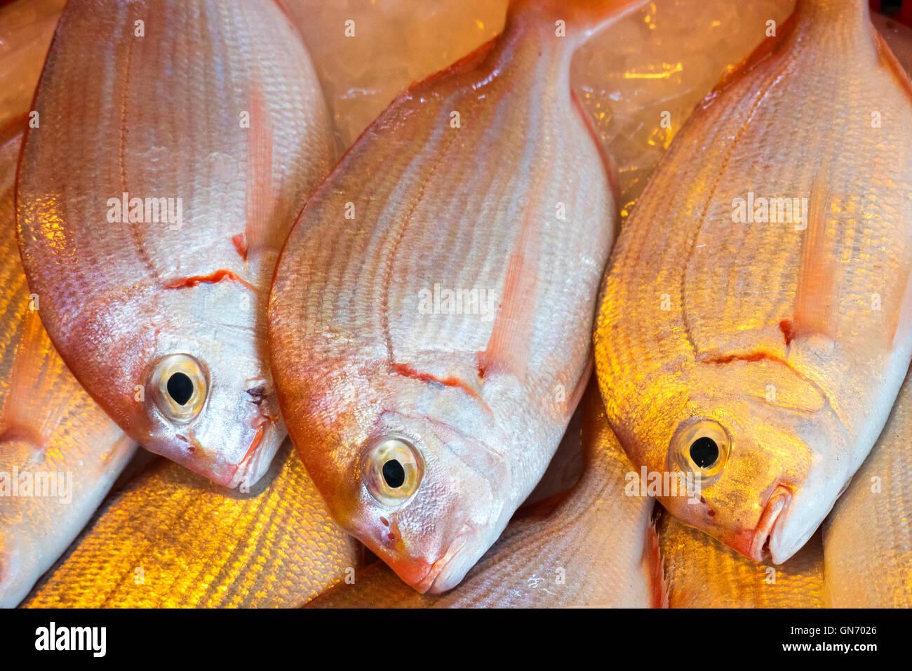 Fresh Sea Bream Stock Photo
