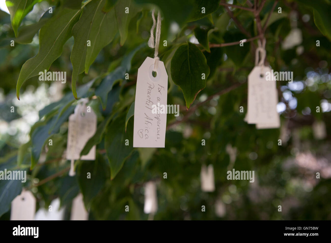 Tags with messages on Yoko Ono wish tree - USA - Stock Image