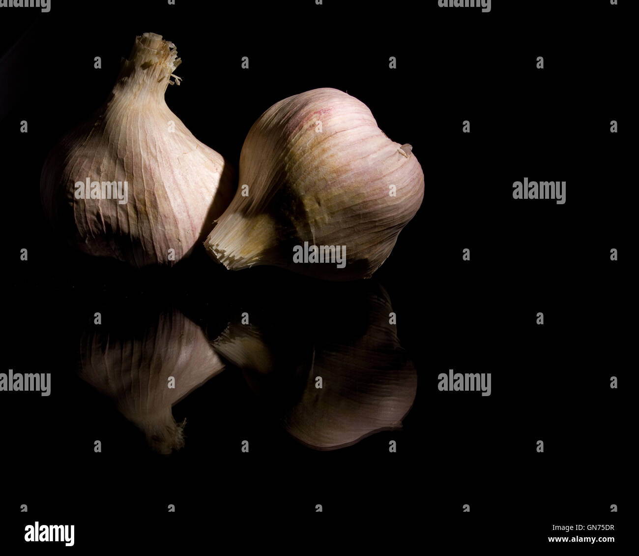 Close up of two Elephant Garlic bulbs on a black background - Stock Image