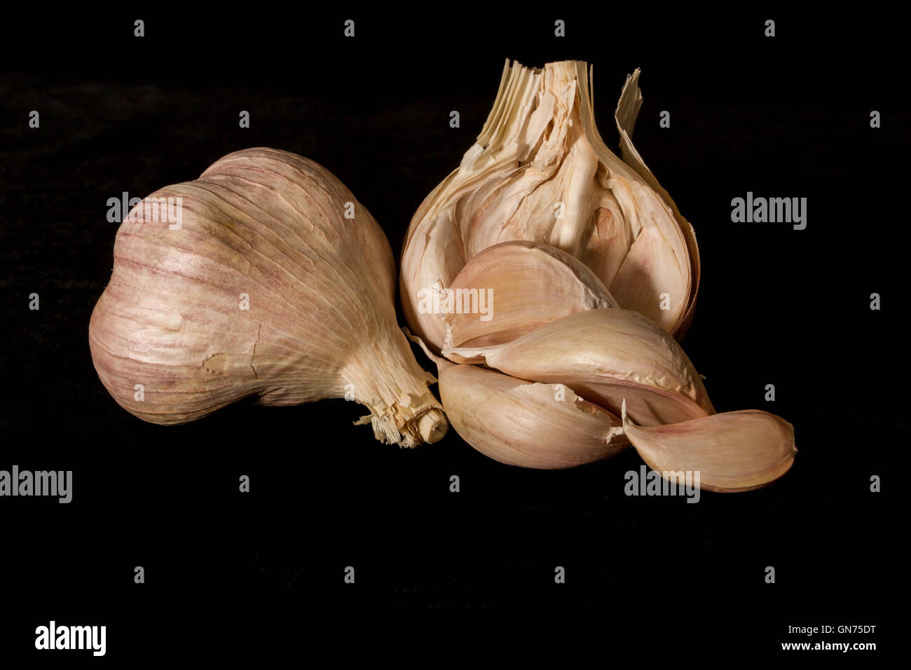 Close up of Elephant Garlic on a black background - Stock Image