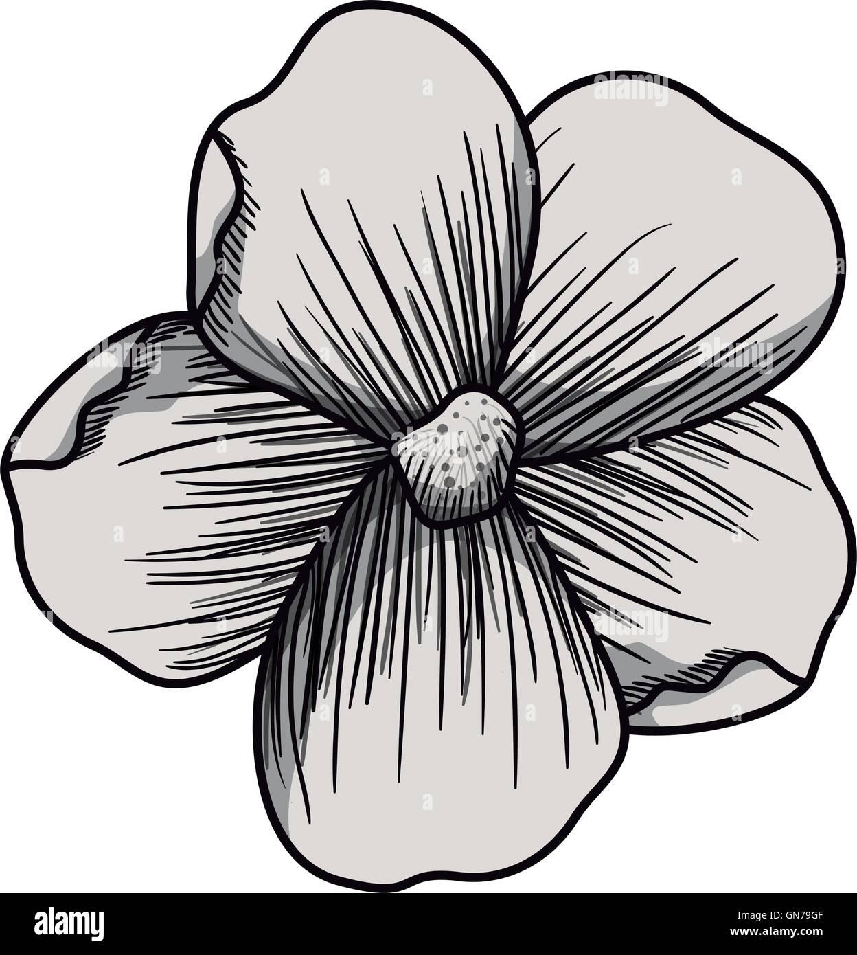 Beautiful Flower Drawings Stock Photos Beautiful Flower Drawings