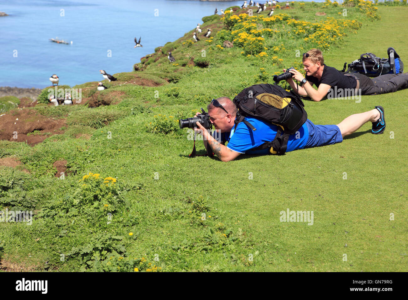 Puffins being photograhed by men lying on the ground on Lunga, one of the Treshnish isles In the Inner Hebrides - Stock Image