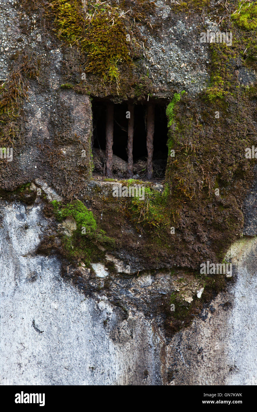 Window of the abandoned pillbox model 37 once used to be a part of the Czechoslovak border fortifications located - Stock Image