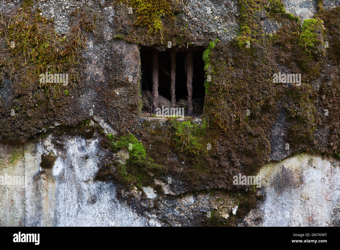 Window of the abandoned pillbox model 37 once used to be a part of the Czechoslovak border fortifications located Stock Photo
