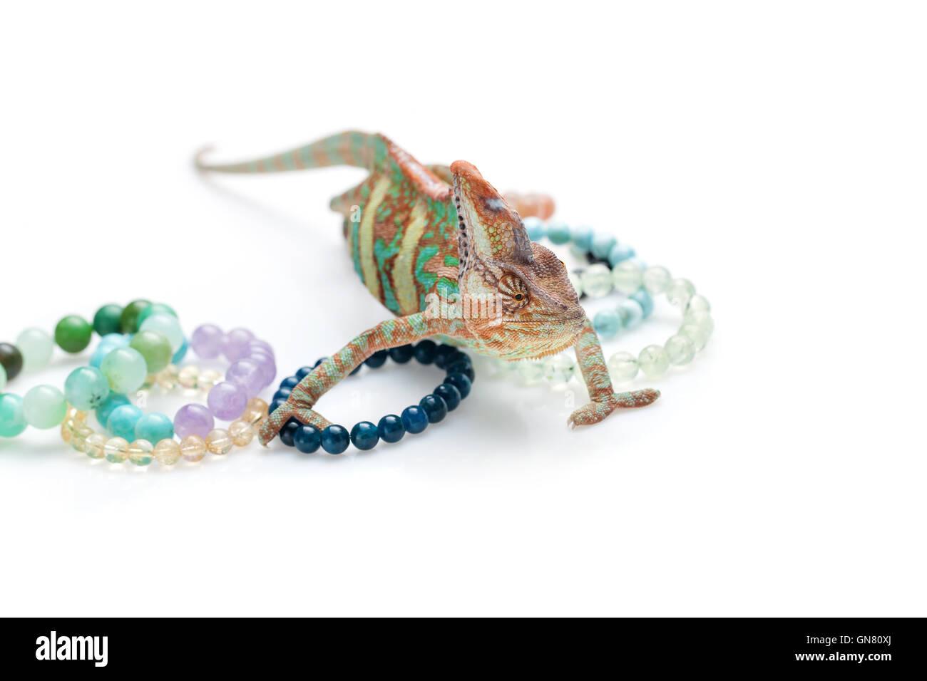Beautiful chameleon with natural stone bracelets - Stock Image
