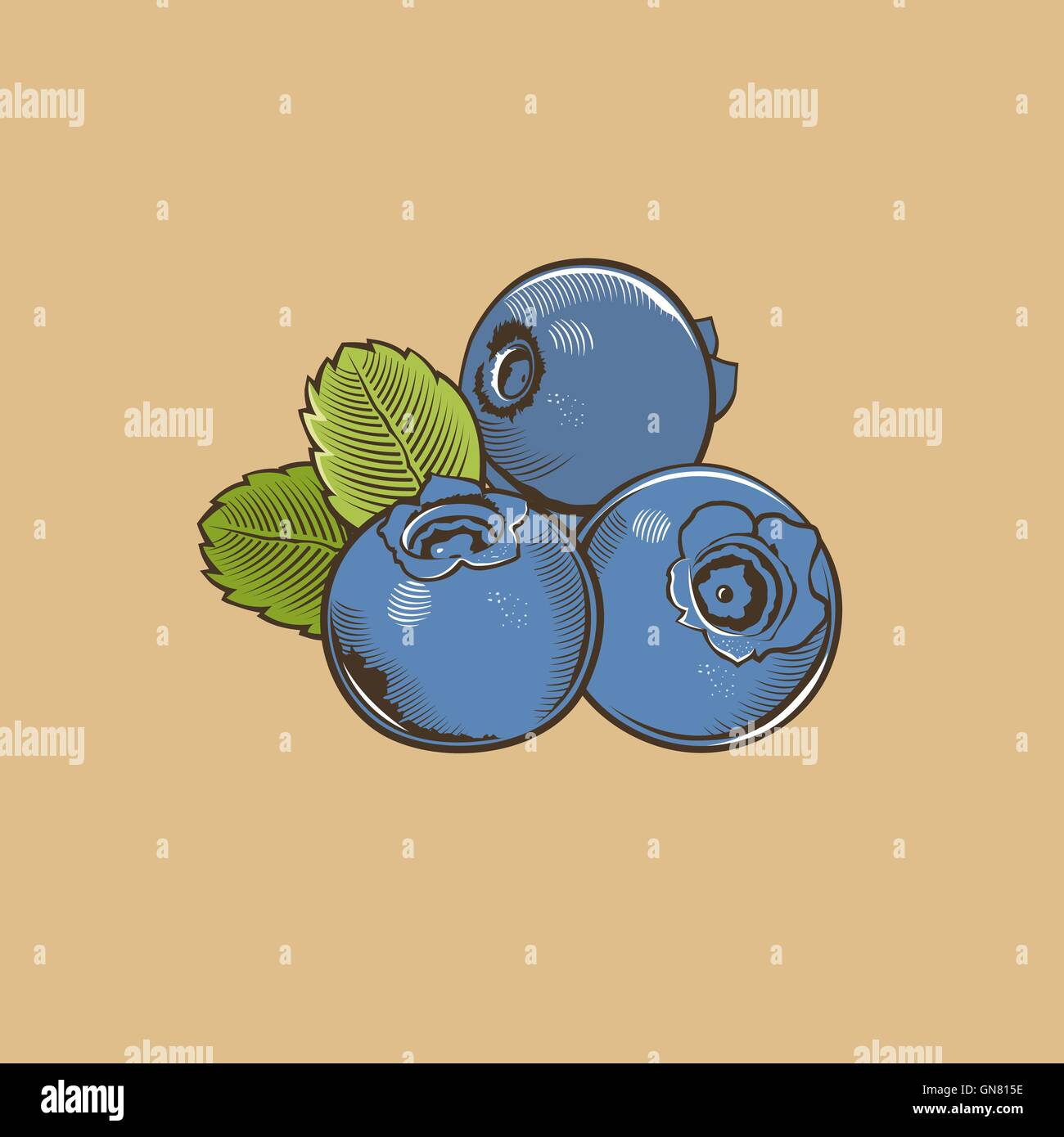 Bilberry in vintage style. Colored vector illustration - Stock Vector