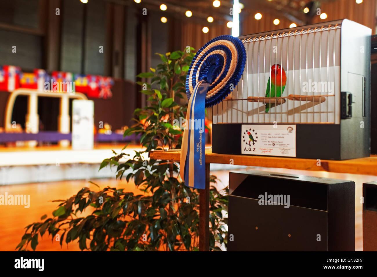 AZ Europa Championat, Karlsruhe, Baden-Württemberg, Deutschland - Stock Image