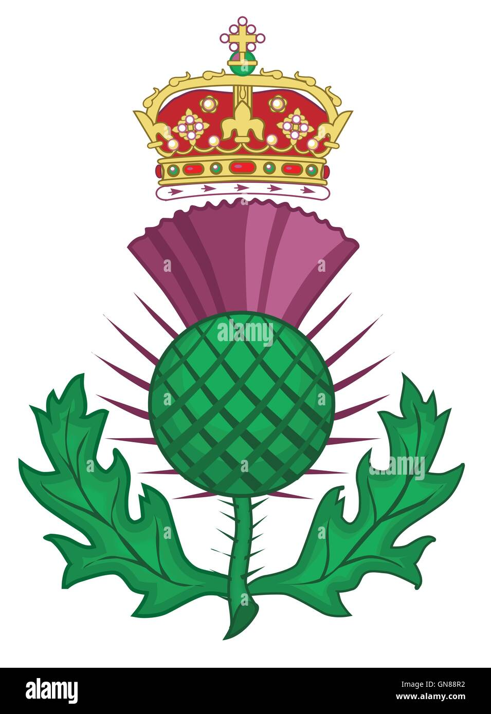 Thistle Symbol Of Scotland Stock Vector Art Illustration Vector