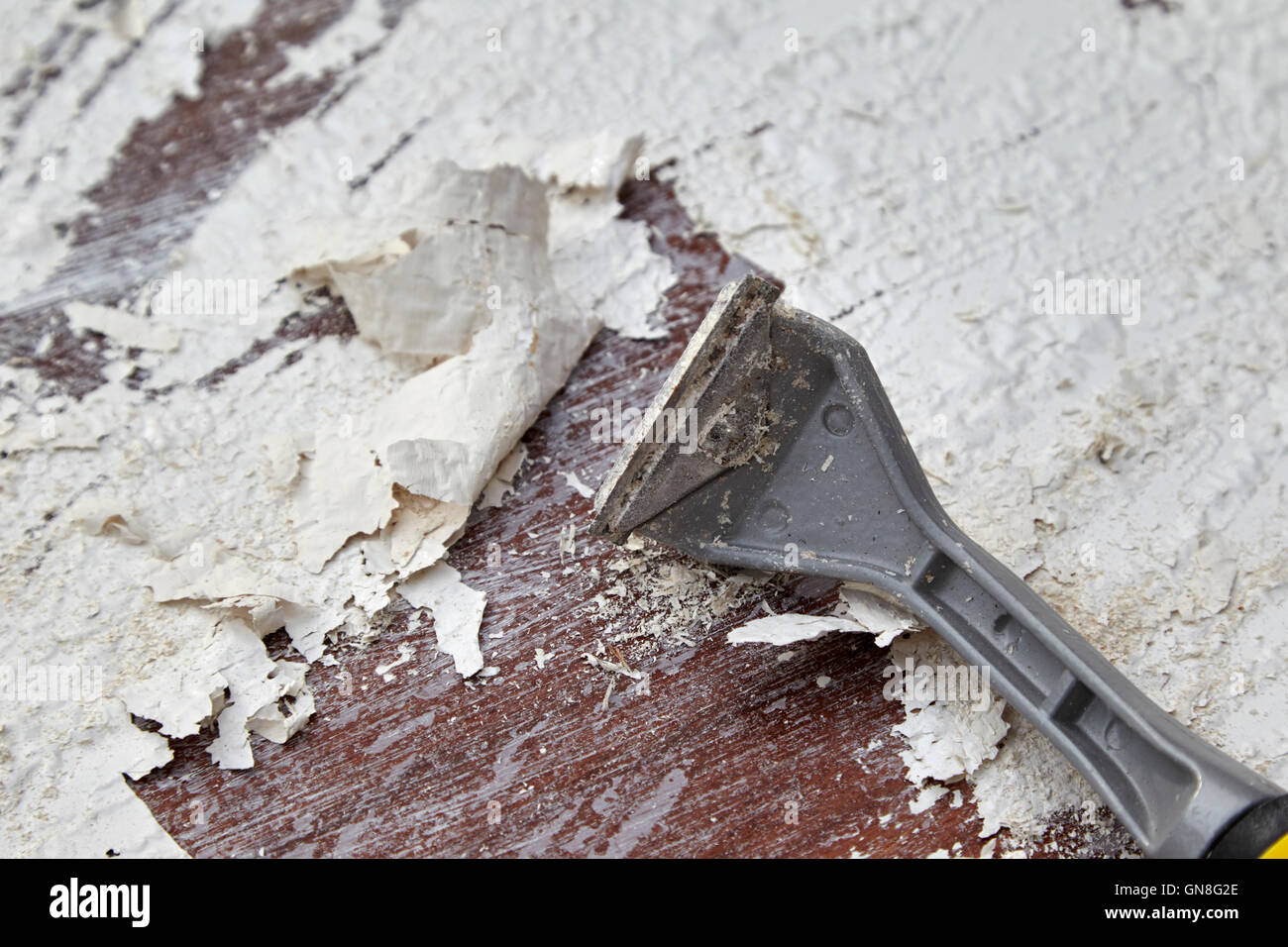 using blade scraper to scrape off paint bubbling up due to application of paintstripper on a wooden door - Stock Image