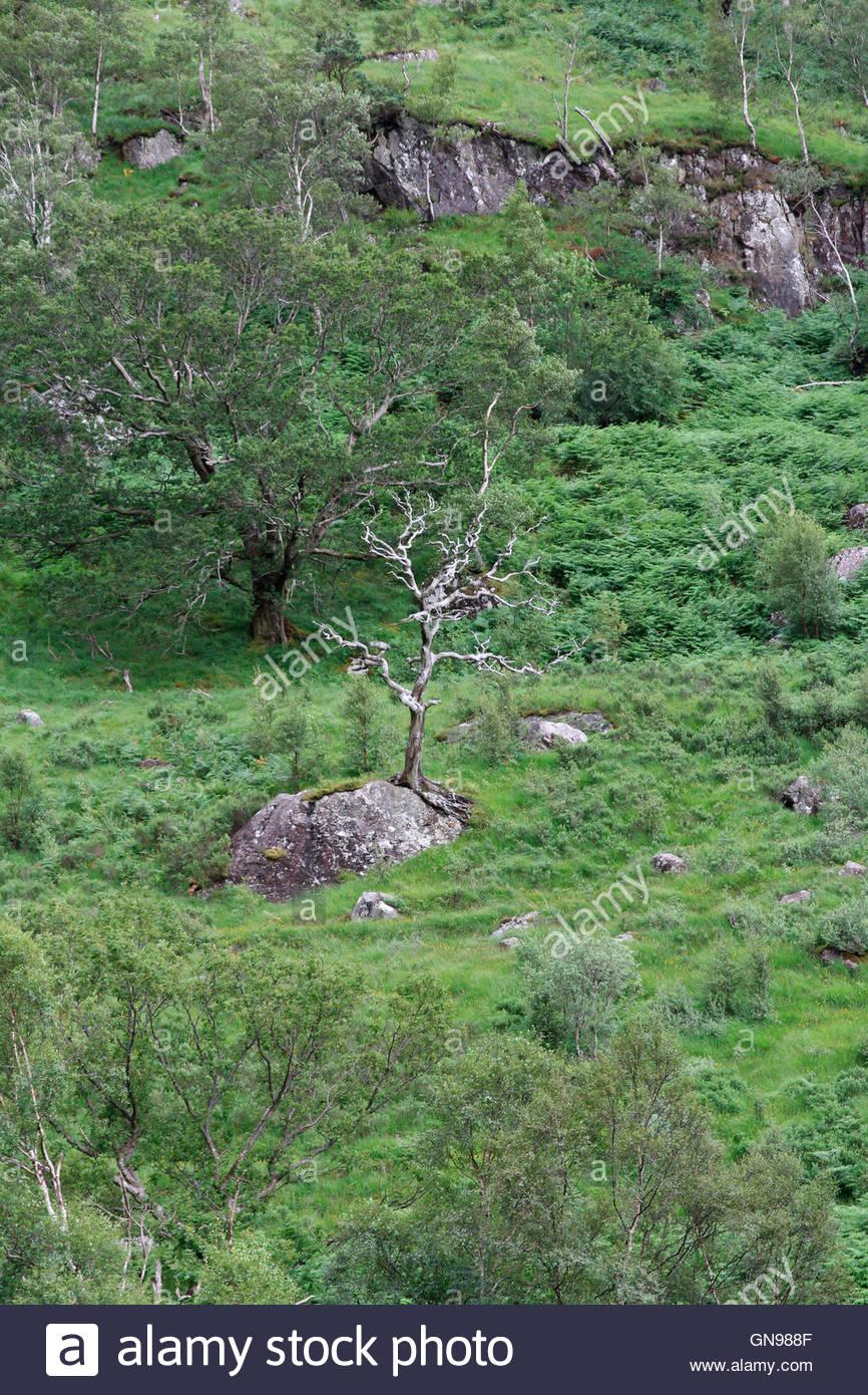 glen nevis, near fort william, grampian mountains, highlands, scotland, united kingdom - Stock Image