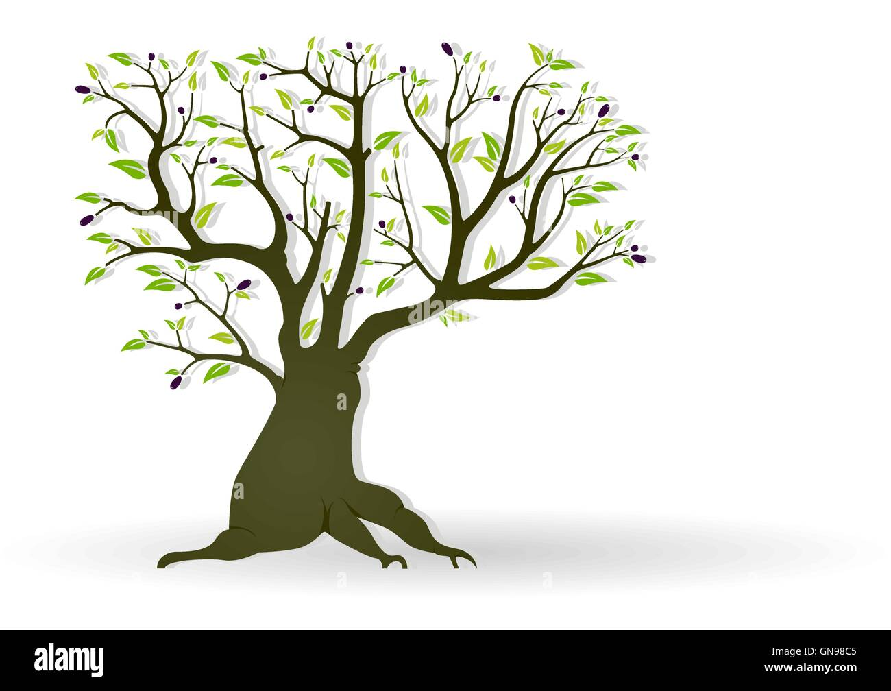 Olive Tree - Stock Vector
